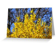 Golden Forsythia against a Cloudless Blue Sky Greeting Card