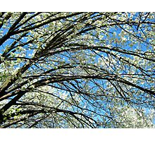 Spring Blossoms, New York City Photographic Print