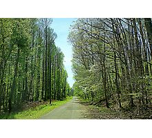 Road of TALL Timbers Photographic Print