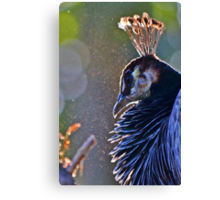 Crown of Feathers Canvas Print