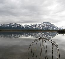 Maskinonge Reflections by Darcy Overland