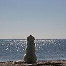Zen dog by Trine