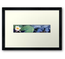 Lily in a Pond Framed Print