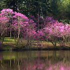 Marmo Lake Redbud Trees  by Adam Bykowski