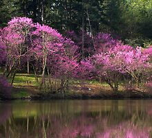 Marmo Lake Redbud Trees  by Adam Bykowski
