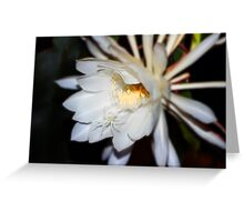 Queen of the Night Flower in Colour Greeting Card