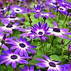 Bursts of Purple and White by KEBSD123