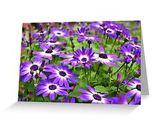 Bursts of Purple and White Greeting Card