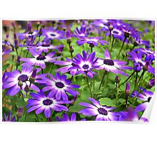 Bursts of Purple and White Poster