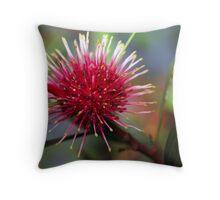 Pincushion Hakea Throw Pillow