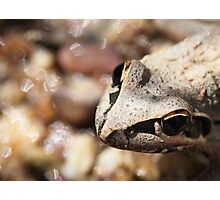Frog or Toad? Photographic Print
