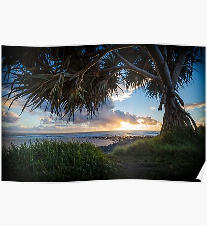 Interesting title about Pandanus Trees, Sunrise, and Grass Poster