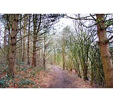 A WALK IN THE WOODS. Photographic Print