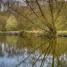 Reflection by Thasan
