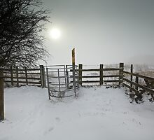 Misty Winter Walk by Andy Freer
