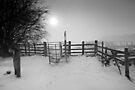 Misty Winter Walk BW by Andy Freer