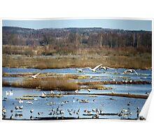 Bird Migrants In Spring Poster