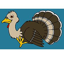 Thanksgiving Turkey with Light Brown Feathers Photographic Print
