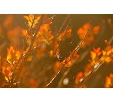 Spring Spider .. Photographic Print