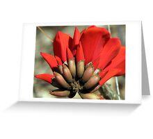 Coxcomb Greeting Card