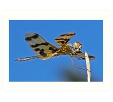 Golden Dragonfly Art Print