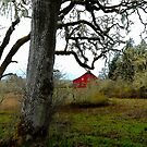 I Can See You ~ Old Red Barn ~ by Charles & Patricia   Harkins ~ Picture Oregon