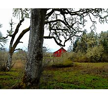 I Can See You ~ Old Red Barn ~ Photographic Print