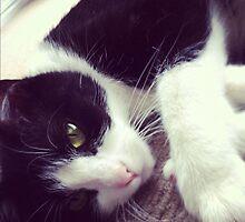 Meow by elizadavis