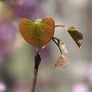 """Redbud...The """"Heart"""" of Spring!... by rasnidreamer"""