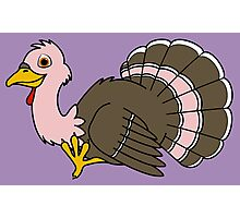 Thanksgiving Turkey with Light Pink Feathers Photographic Print