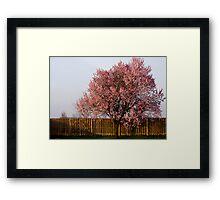 Spring Solitude Framed Print