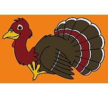 Thanksgiving Turkey with Red Feathers Photographic Print