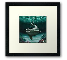 Hawaiian Monk Seal ~ Acrylic  Framed Print