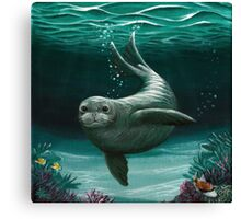 Hawaiian Monk Seal ~ Acrylic  Canvas Print