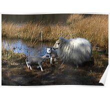 Walking free,  new born lambs Poster