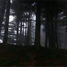 Woods  by melanie1313