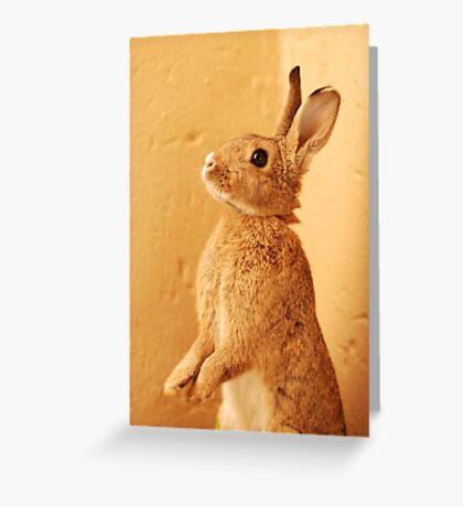 a bunny named milo Greeting Card