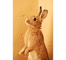a bunny named milo Photographic Print