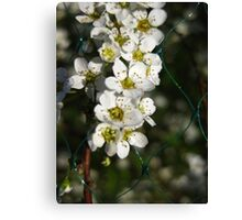 netted orange blossom Canvas Print