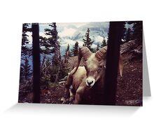 Ram Banff Greeting Card