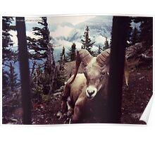 Ram Banff Poster