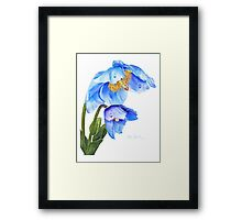 Twin Blue Poppies Framed Print