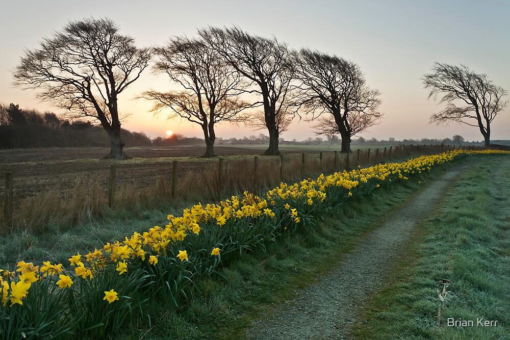 Spring Dawn by Brian Kerr