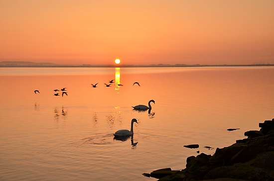 Sunrise Fly by  by Martina Fagan