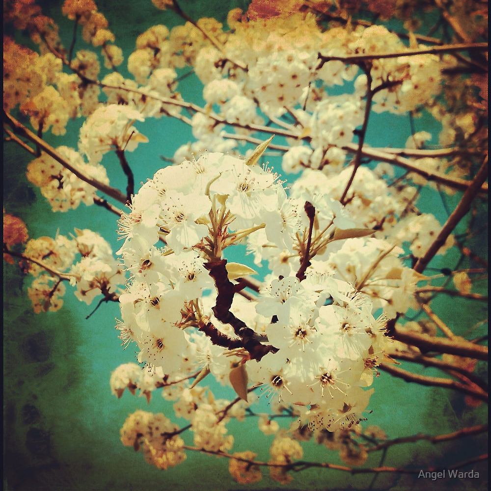 spring tree by Angel Warda