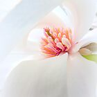 White Ribboned Heart... by LindaR