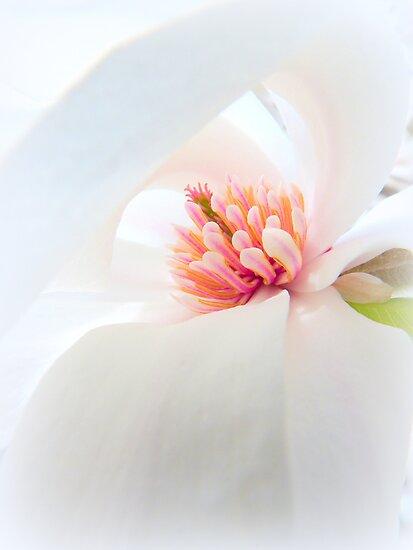 White Ribboned Heart... by LindaR