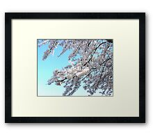 SPRING WHITE Framed Print