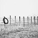 Misty morning by Jena Ferguson