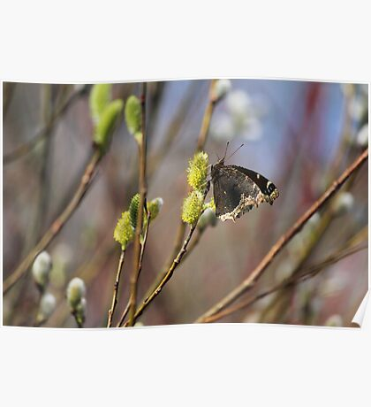 Now this is a sign of spring!!!! Poster